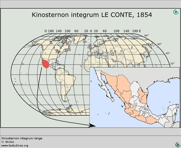 Kinosternon integrum:  Range distribution