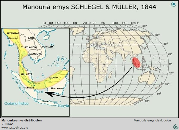 Manouria emys:  Range distribution